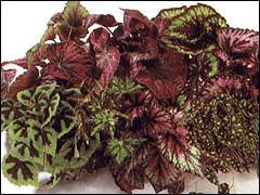 Лиственные цветы фото с названием